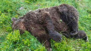 Un ours a été retrouvé tué près de la station de ski de Guzet (Ariège), le 9 juin 2020. (MINISTERE DE LA TRANSITION ECOLOGIQUE ET SOLIDAIRE)
