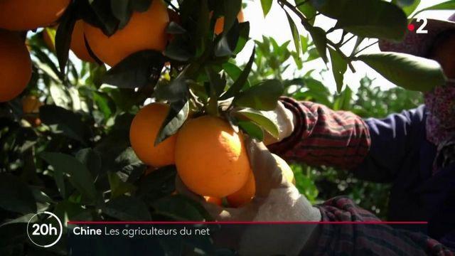 Chine : les agriculteurs du net