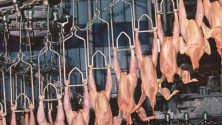 (Les poulets européens échapperont-ils au lavage chimique ? © SIPA/ GILE MICHEL)