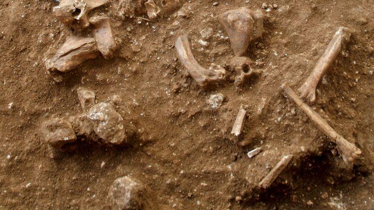 Un document photo (détail) mis à disposition par le Dr Yossi Zaidner de l'Université hébraïque de Jérusalem, montrant des os et d'autres objets découverts lors des fouilles sur un site à Nesher Ramla, dans le centre d'Israël, publié le 24 juin 2021. (TEL-AVIV UNIVERSITY / AFP)