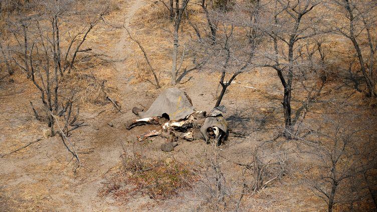 Vue aérienne du cadavre d'un éléphant tué avec 86 autres dans la région de Mababe au nord du Botswana (19 septembre 2018). (SIPHIWE SIBEKO /REUTERS)