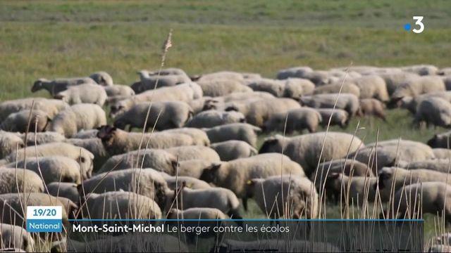 Mont-Saint-Michel : un berger contre les écologistes dans le cadre de la Loi Littoral