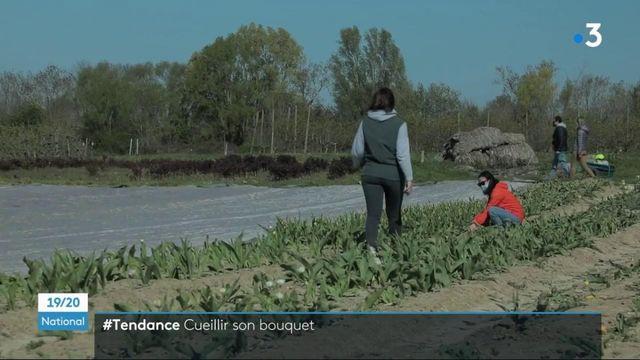 Tendance : fleurs, fruits et légumes… les cueillettes à faire soi-même ont du succès