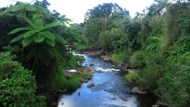 La forêt de Daintree, en Australie, fait partie du territoire rendu à la communauté aborigène des Eastern Kuku Yalanji. (THIERRY SUZAN / MAXPPP)