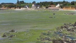 Les décès de deux chiens, après une balade sur la plage a relancé la question autour de la toxicité des algues vertes présentes sur les plages en Bretagne. (FRANCE 3)