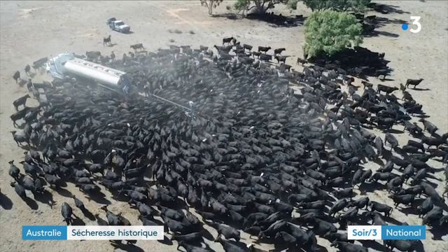 Australie : sécheresse historique