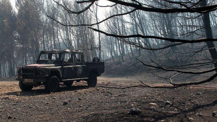 Les traces laissées par l'incendie qui a ravagé 400 hectares de végétations près d'Orgon (Bouches-du-Rhone) le 26 août 2012. (SEBASTIEN HREBLAY / AFP)