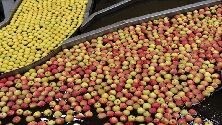 (En Limousin, cet embargo pénalise surtout les producteurs de pommes © Maxppp)