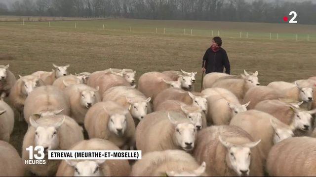 Made in France : le retour du matelas en laine