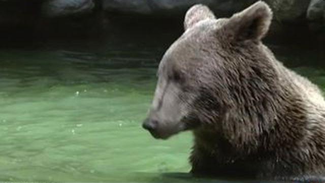 Au parc animalier des Pyrénées, les animaux côtoient au plus près les visiteurs