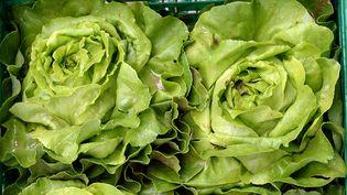 Selon une étude publiée le 22 septembre 2015, cinq pesticides interdits en France ont été retrouvés dans des salades testées, dont du DDT. (WINFRIED ROTHERMEL / PICTURE ALLIANCE/ AFP)