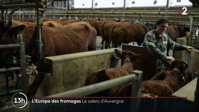 Gastronomie : à la découverte du salers d'Auvergne