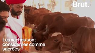 En Inde, des musulmans sont lynchés pour avoir consommé de la vache. (Brut)