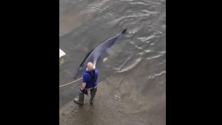 Royaume-Uni : une baleine coincée dans la Tamise libérée par des sauveteurs (FRANCE 2)