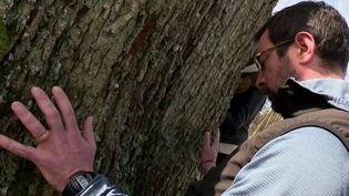 La discipline nous vient du Japon. Son nom : la sylvothérapie. Mais quelle est la part de vérité dans cette idée que les arbres seraient bons pour notre santé ? (France 2)
