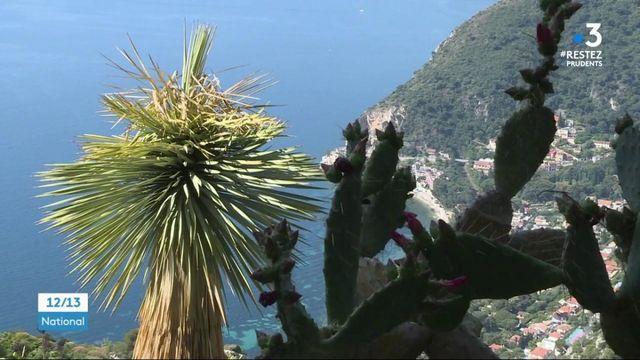 Côte-d'Azur : Voyage au cœur du jardin botanique d'Èze