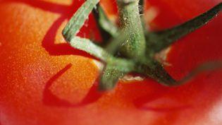 Une nouvelle variété de tomates vient de naître à l'Institut de la recherche agronomique (Inra).Photo d'illustration. (LAURENCE MOUTON / MAXPPP)