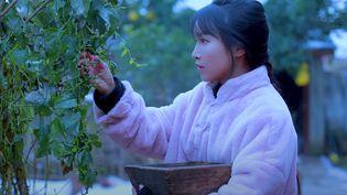 Li Ziqi dans une de ses vidéos sur sa chaîne YouTube (CAPTURE D'ECRAN YOUTUBE)