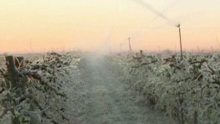 Le froid est de retour, depuis lundi 5 avril. Cette vague de gel, qui survient au moment où les bourgeons sont les plus fragiles, inquiète les agriculteurs. (France 2)
