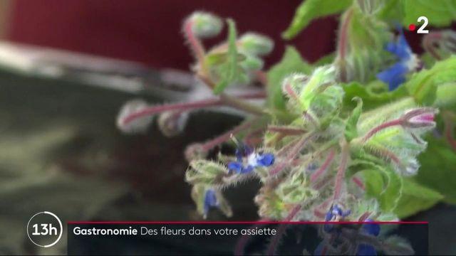 Gastronomie : les fleurs et les insectes ont la cote