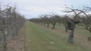 Verger dans la Drôme - janvier 2012 (France 2)