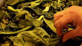 Consommation : un supermarché produit ses propres légumes biologiques (France 2)