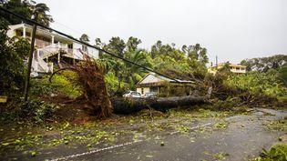 Dégâts dans la commune de Petit-Bourg, près de Pointe-à-Pitre (Guadeloupe), après le passage de l'ouragan Maria, le 19 septembre 2017. (CEDRICK ISHAM CALVADOS / AFP)