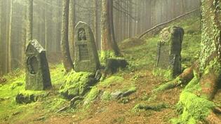 Cimétière allemand à l'abandon au coeur de la Forêt de la Tête des Faux dans les Vosges  (Michael St Maur Sheil)