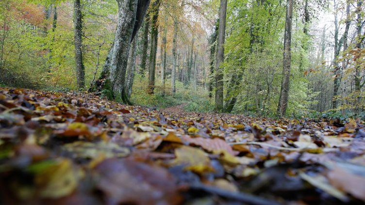La forêt de Retz (Aisne), où le corps d'Elisa Pilarski a été retrouvé par son compagnonle 16 novembre 2019. (MAXPPP)