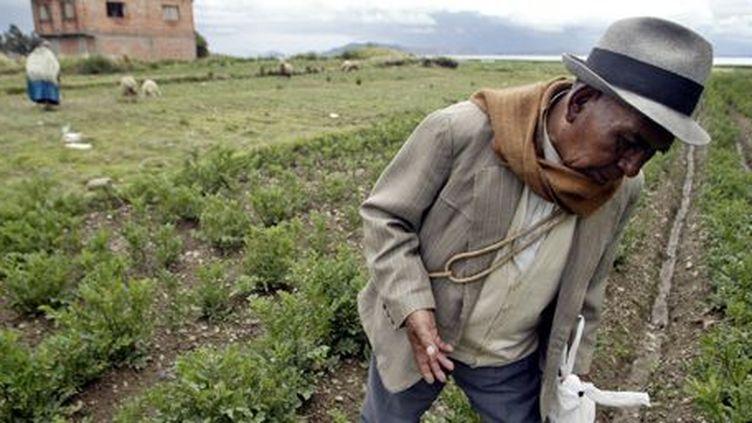 Paysan bolivien d'origine indienne aymara, dans le village de Soncochi à 90 kilomètres au nord de La Paz, la capitale, sur les rives du lac Titicaca (13 janvier 2004). (REUTERS - David Mercado)