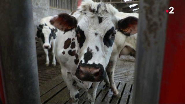 Consommation : le lait est à nouveau plébiscité par les Français