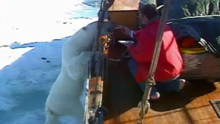 ours polaire sur le bateau (image capturée sur le sine ut.no) (ut.no)