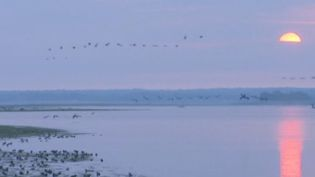Des grues cendrées en plein envol, au-dessus du Lac du Der (FRANCE 3)
