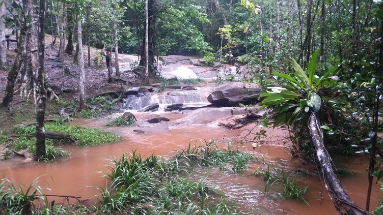 Le secteur du projet de mine d'or de la Montagne d'or, en Guyane, en avril 2018. (ANNE-LAURE BARRAL / RADIO FRANCE)