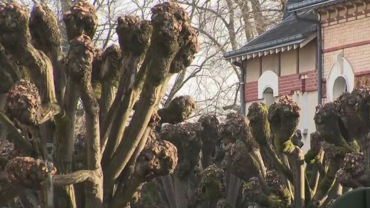 ÀOrleans (Loiret), la mairie vient d'adopter une mesure choc pour protéger les arbres de la ville. (CAPTURE ECRAN FRANCE 2)