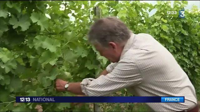 Brexit : les conséquences pour les viticulteurs en France