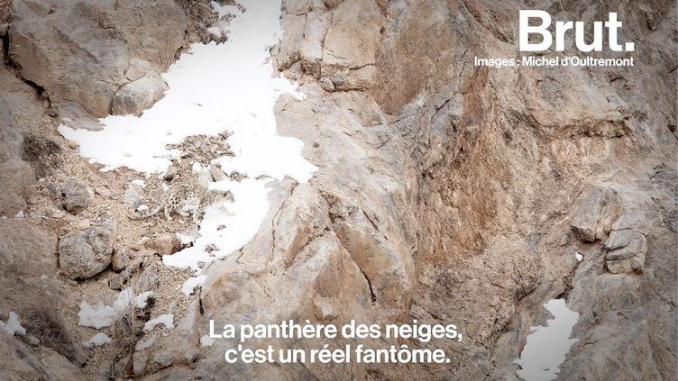 VIDEO. Sur les traces de la panthère des neiges, il arpente les sommets hostiles de l'Himalaya (BRUT)