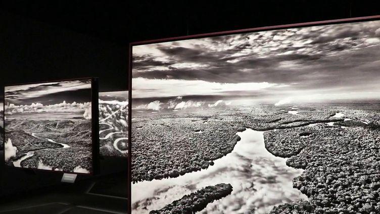 """Exposition : avec """"Amazonia"""", le photographe Sebastião Salgado veut montrer que la forêt amazonienne, menacée, est encore en vie (France 2)"""