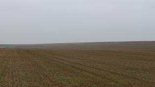 L'un des champs cultivés par Pascal Jacquemin à l'entrée de son village de Sompuis (Marne), le 22 janvier 2015. (BENOIT ZAGDOUN / FRANCETV INFO)