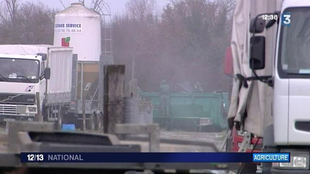 Grippe aviaire : l'inquiétude des éleveurs du sud-ouest