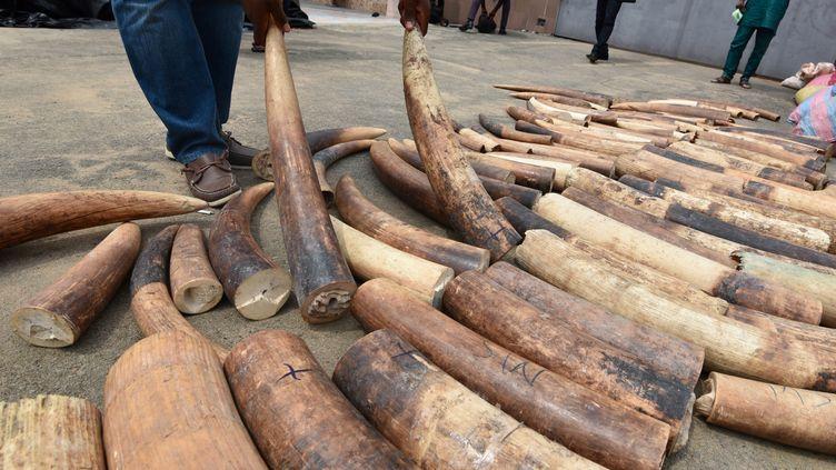 Le trafic d'ivoire se déroule aussi via Internet. Illustration. (SIA KAMBOU / AFP)