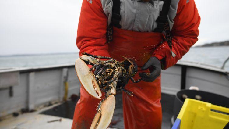 Un pêcheur de homards, à Paimpol (Côtes-d'Armor), le 20 décembre 2016. (DAMIEN MEYER / AFP)