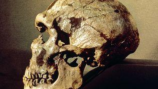 Crâne d'homme de Néandertal. (LEEMAGE / AFP)