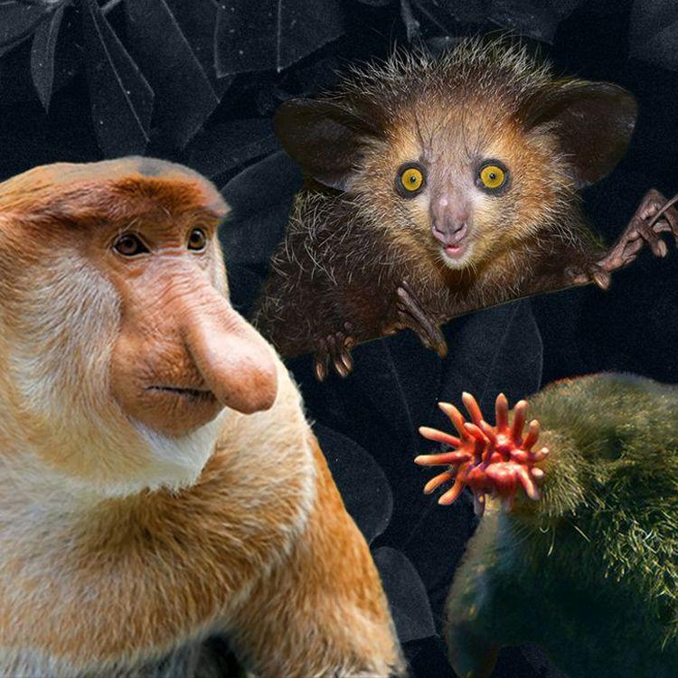 Plusieurs espèces animales jugées non charismatiques sont menacées d'extinction. (AWA SANE / FRANCEINFO)