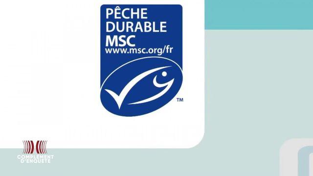 """Complément d'enquête. Pêche durable : """"un impact quasi nul"""" pour le label MSC créé par le WWF"""