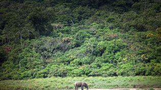 Parc national d'Ivindo, aire protégée de la forêt gabonaise riche en flore en faune. Une exception dans la région où une grande partie des forêts d'Afrique centrale sont en recul. Le 26avril2019 près de Makokou (Gabon). (AMAURY HAUCHARD / AFP)