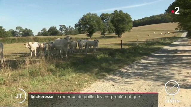 Sécheresse : les éleveurs touchés par une pénurie de fourrage