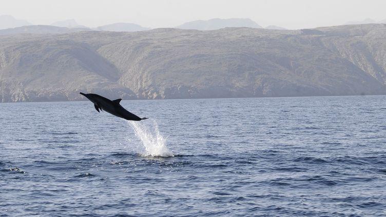 Le dauphin est utilisé à des fins militaires par certaines armées. (A. DEMOTES / PHOTONONSTOP / AFP)