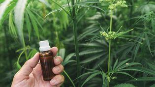 Une fiole d'huile de CBD dans un champ de cannabis. (IGOR STEVANOVIC / SCIENCE PHOTO / IST / AFP)