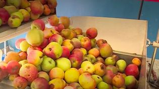 pommes (FRANCE 3)